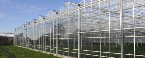 Agricultural glasshouse in the Westland in Holland